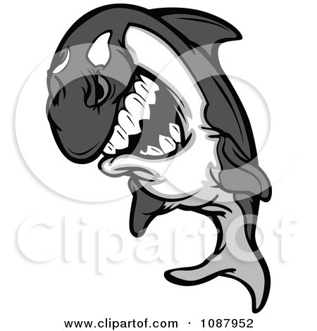 Clipart Aggressive Killer Whale Orca Mascot Leaping - Royalty Free Vector Illustration by Chromaco