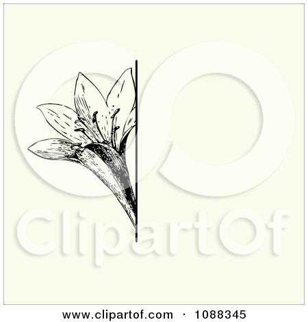 Clipart Vintage Black Lotus Flower And Beige Invitation Background - Royalty Free Vector Illustration by BestVector