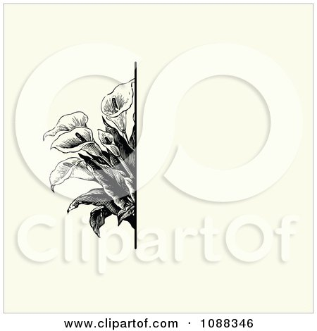Clipart Vintage Black Calla Lily Flower And Beige Invitation Background - Royalty Free Vector Illustration by BestVector