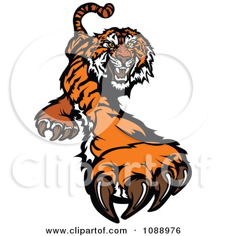 Clipart Tiger Mascot Clawing - Royalty Free Vector Illustration by Chromaco