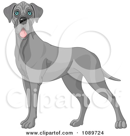 Clipart Cute Blue Great Dane Dog Standing - Royalty Free Vector Illustration by Pushkin