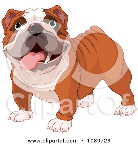 Clipart Cute English Bulldog Standing - Royalty Free Vector Illustration by Pushkin