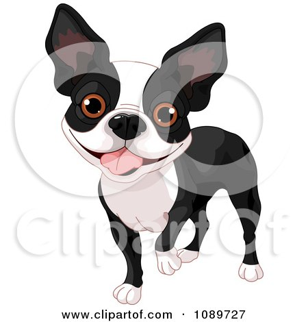 Clipart Cute Boston Terrier Dog Standing - Royalty Free Vector Illustration by Pushkin
