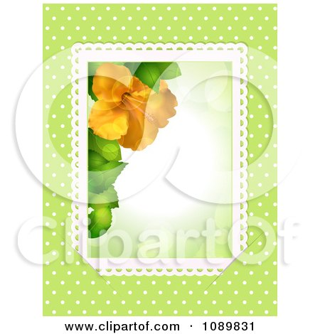 Clipart 3d Orange Hibiscus Flower Border With Lace Over Green With Polka Dots - Royalty Free Vector Illustration by elaineitalia