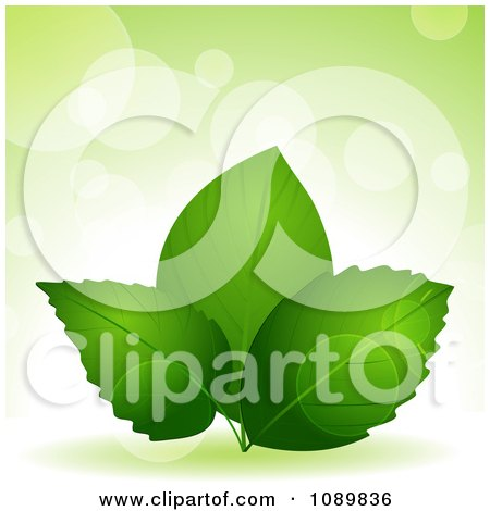 Clipart 3d Green Plant Leaves Over Flares With Copyspace - Royalty Free Vector Illustration by elaineitalia