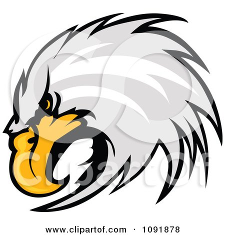 Clipart Focused Bald Eagle Head - Royalty Free Vector Illustration by Chromaco