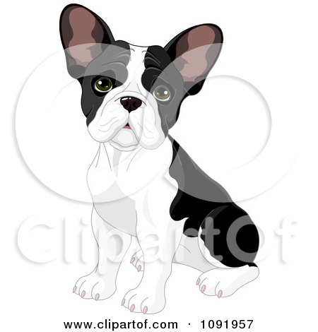 Cute Black And White Frenchie Bulldog Puppy Sitting Posters, Art Prints
