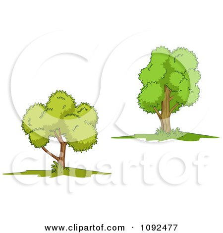 Clipart Two Mature Trees 2 - Royalty Free Vector Illustration by Seamartini ...