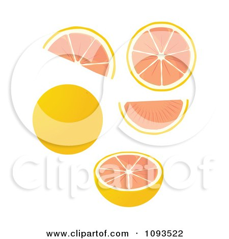 Clipart Grapefruits - Royalty Free Vector Illustration by Randomway