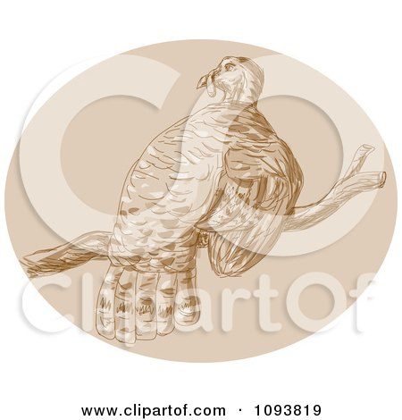 Clipart Sketched Turkey Bird Perched On A Branch - Royalty Free CGI Illustration by patrimonio