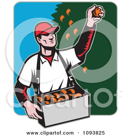 Clipart Retro Male Fruit Picker Picking Oranges From A Tree - Royalty Free Vetor Illustration by patrimonio