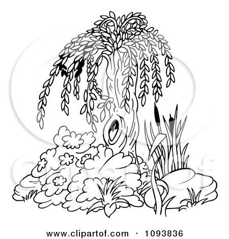 willow tree coloring pages - photo#20