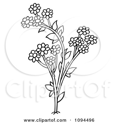 Clipart Outlined Daisy Flowers - Royalty Free Vector Illustration by dero