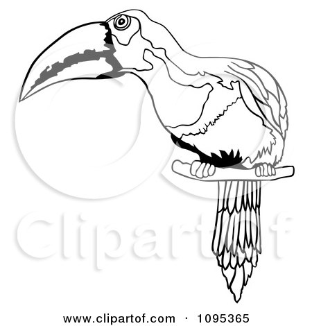 Clipart Of A 3d Toucan Bird And Shadow