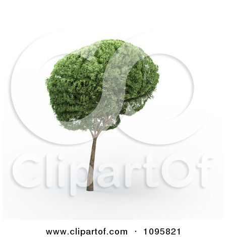Clipart 3d Tree Brain - Royalty Free CGI Illustration by Mopic