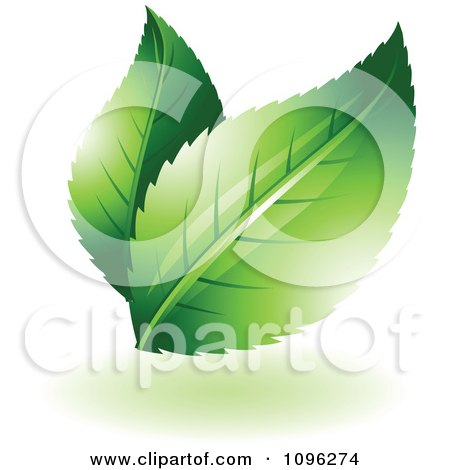 Clipart Two Green Leaves With Flares - Royalty Free Vector Illustration by TA Images