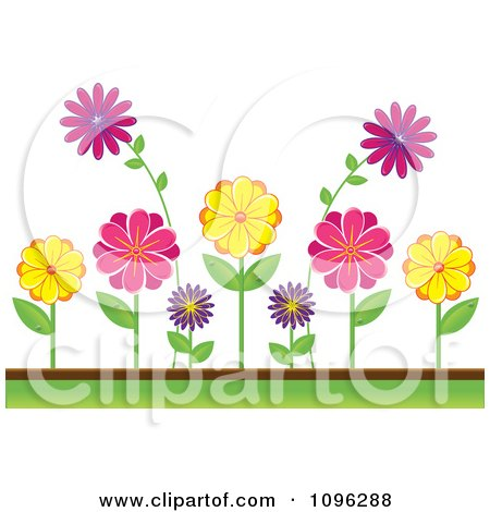 Clipart Colorful Daisies In A Flower Bed - Royalty Free Vector Illustration by Pams Clipart