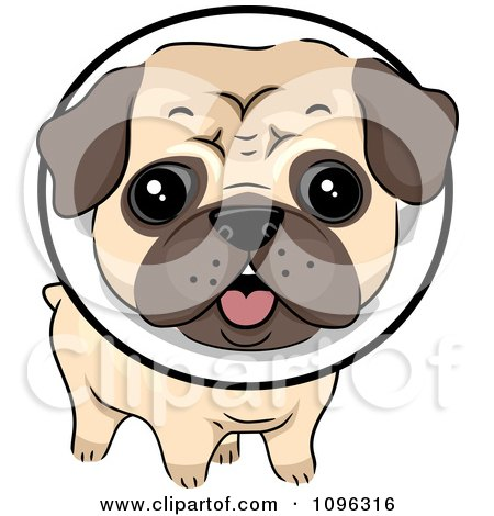 Clipart Cute Pug Dog Wearing A Protective Elizabethan Collar - Royalty Free Vector Illustration by BNP Design Studio