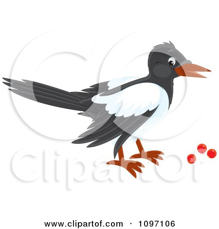 Magpie Eating Red Berries