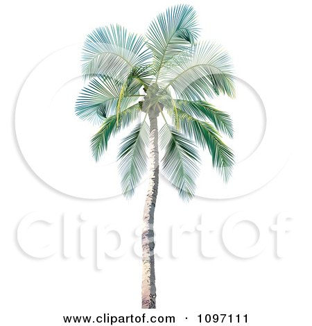 Clipart 3d Tropical Palm Tree 1 - Royalty Free Vector Illustration by dero