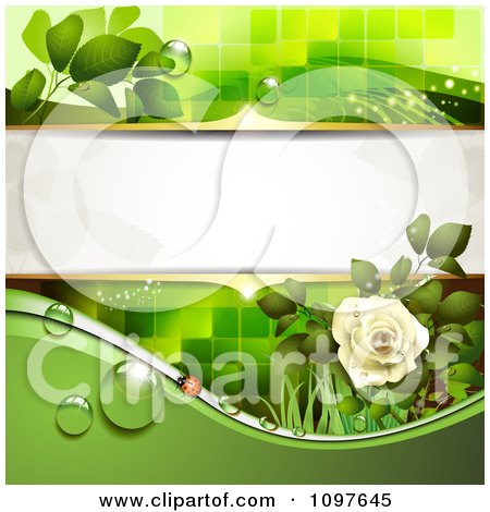 Clipart Green Wedding Or Spring Background With A Dewy White Rose And Ladybug - Royalty Free Vector Illustration by merlinul