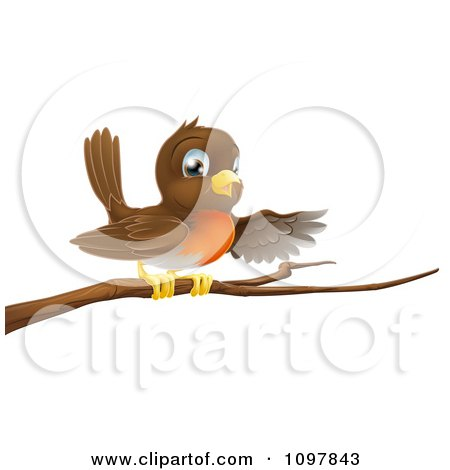 Clipart Cute Robin Bird Perched On A Branch And Pointing With A Wing - Royalty Free Vector Illustration by AtStockIllustration