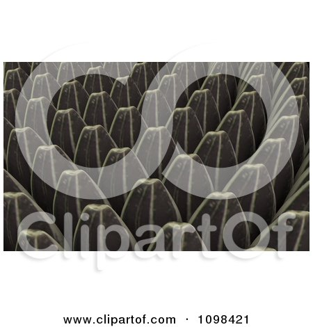 Clipart 3d Sunflower Seeds An Example Of A Fibonnacci Pattern - Royalty Free CGI Illustration by Leo Blanchette