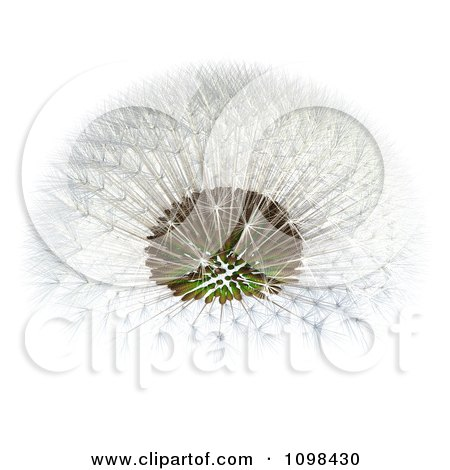 Clipart 3d Dandelion Seed Head Shown With A Fibonacci Sequence Pattern 4 - Royalty Free CGI Illustration by Leo Blanchette
