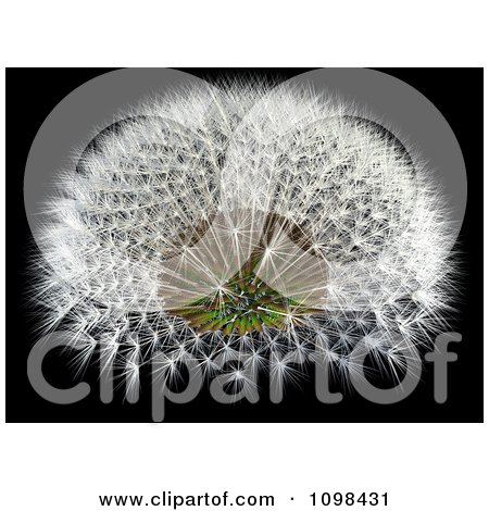 3d Dandelion Seed Head With A Fibonacci Sequence Pattern 4 Posters, Art Prints