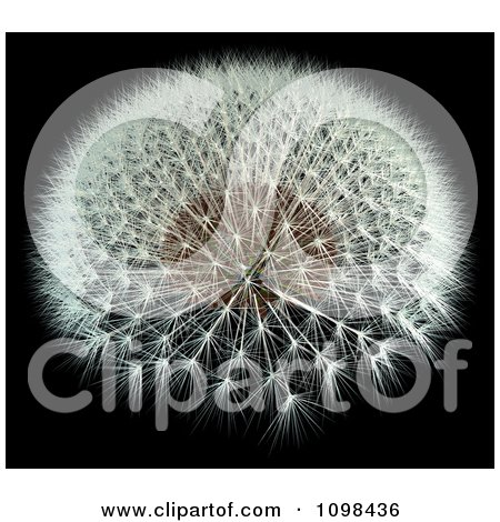 3d Dandelion Seed Head With A Fibonacci Sequence Pattern 1 Posters, Art Prints