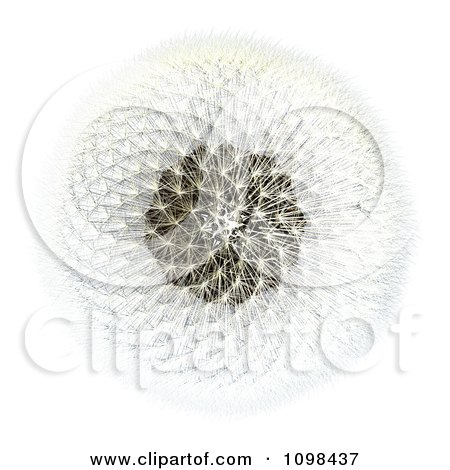Clipart 3d Dandelion Seed Head Shown With A Fibonacci Sequence Pattern 2 - Royalty Free CGI Illustration by Leo Blanchette