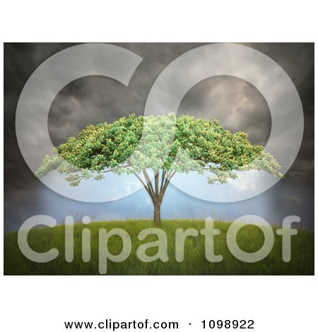 Clipart 3d Tree With Umbrella Shaped Canopy Under Dark Storm Clouds - Royalty Free CGI Illustration by Mopic