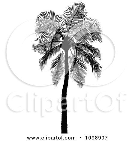 Clipart Silhouetted Coconut Palm Tree - Royalty Free Vector Illustration by dero