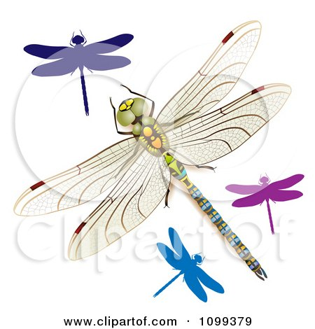 Clipart 3d Colorful Dragonflies - Royalty Free Vector Illustration by merlinul