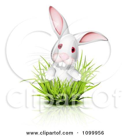 Clipart White Albino Bunny Albino Looking Through Grass - Royalty Free Vector Illustration by Oligo