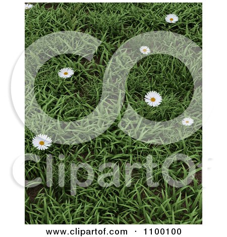 Clipart 3d Background Wild Daisies In Green Grass - Royalty Free CGI Illustration by KJ Pargeter