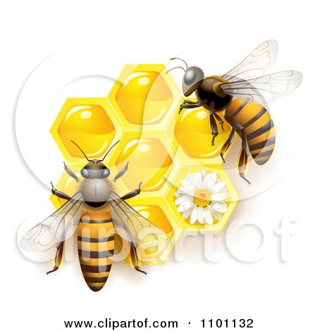 Clipart Honey Bees Over Honeycombs With A Daisy - Royalty Free Vector Illustration by merlinul