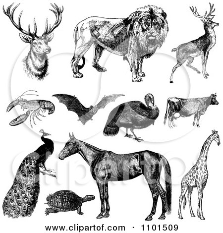 Clipart Retro Black And White Wild And Farm Animals - Royalty Free Vector Illustration by BestVector