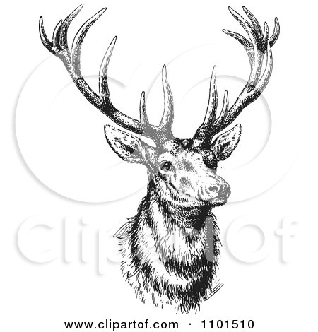 Clipart Retro Black And White Buck Deer - Royalty Free Vector Illustration by BestVector