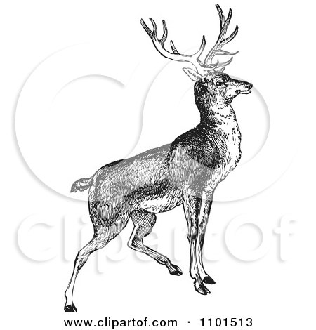Clipart Retro Black And White Alert Buck Deer - Royalty Free Vector Illustration by BestVector