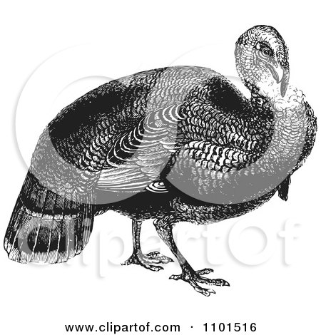 Clipart Retro Black And White Wild Turkey - Royalty Free Vector Illustration by BestVector
