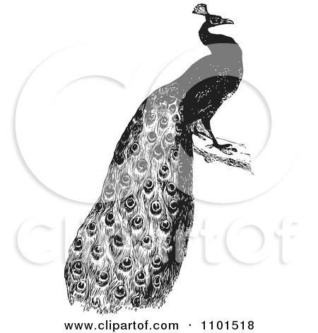 Clipart Retro Black And White Peacock - Royalty Free Vector Illustration by BestVector