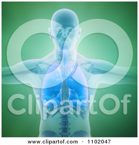 Clipart 3d Man With His Respiratory System Revealed Over Green - Royalty Free CGI Illustration by Mopic