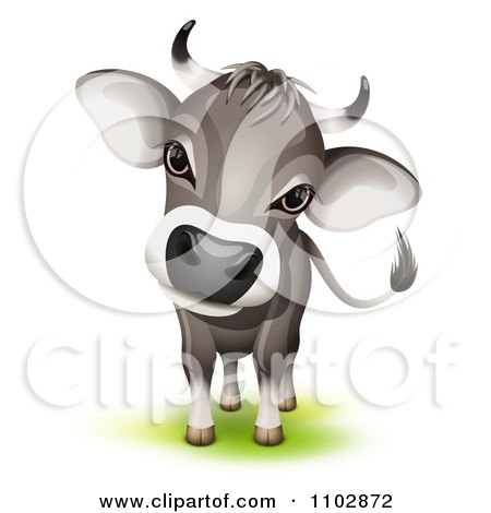 Clipart Cute Curious Swiss Cow Cocking Its Head - Royalty Free Vector Illustration by Oligo