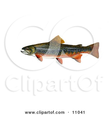 Clipart Illustration of a Brook Trout Fish (Salvelinus fontinalis) by JVPD