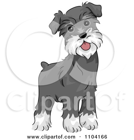 Clipart Happy Alert Miniature Schnauzer Dog - Royalty Free Vector Illustration by BNP Design Studio