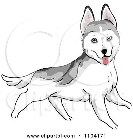 Clipart Happy Siberian Husky Dog Running - Royalty Free Vector Illustration by BNP Design Studio