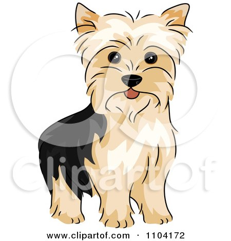 Clipart Happy Alert Yorkshire Terrier Yorkie Dog - Royalty Free Vector