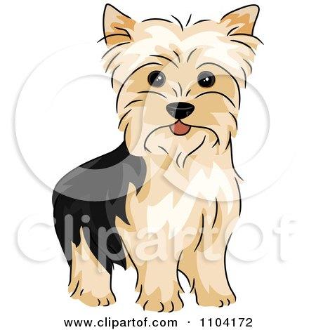 Clipart Happy Alert Yorkshire Terrier Yorkie Dog - Royalty Free Vector Illustration by BNP Design Studio