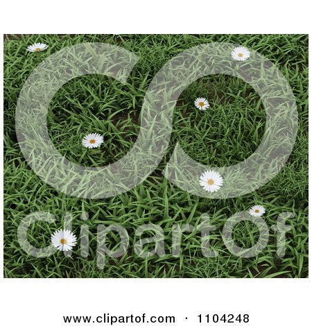 Clipart 3d Daisies In Green Grass - Royalty Free CGI Illustration by KJ Pargeter